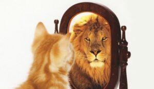 cat-lion-mirror2